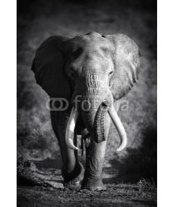 JohanSwanepoel, Elephant Bull (Artistic processing)