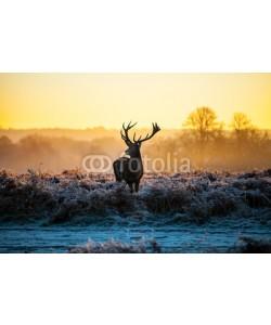 arturas kerdokas, Red deer