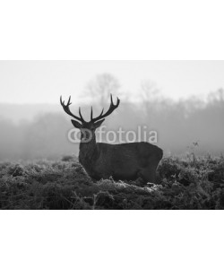arturas kerdokas, Red deer in Richmond park