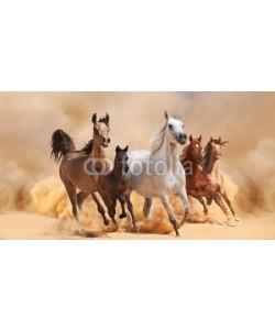 loya_ya, Horses in sand dust