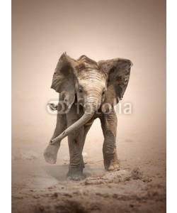 JohanSwanepoel, Elephant Calf mock charging