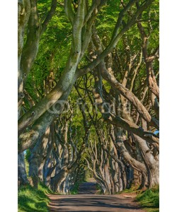 Blickfang, Irland Dark Hedges