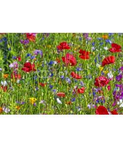 Vera Kuttelvaserova, summer meadow with red poppies