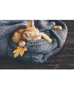 Alena Ozerova, Gigner kitten sleeping
