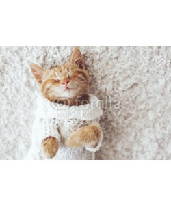 Alena Ozerova, Gigner kitten