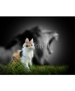 byrdyak, Cat with lion shadow