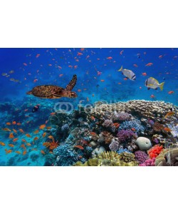 vlad61_61, colorful coral reef with many fishes and sea turtle
