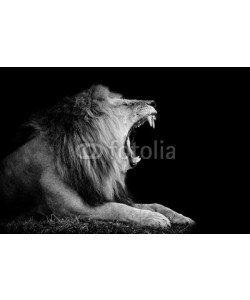 byrdyak, Lion on dark background