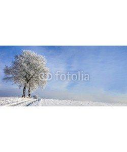 Blickfang, Weg mit Baum im Winter Panorama