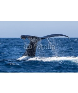 ead72, Humpback Whale Fluke Dripping Water