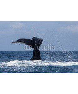ead72, Humpback Whale Tail and Ocean