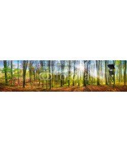 Smileus, Panorama von Wald mit Sonne im Frühling
