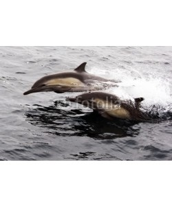 michaelpeak, Two Pacific Common Dolphins