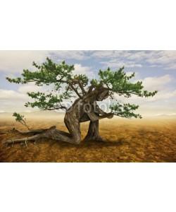 kevron2001, Tree in prayer