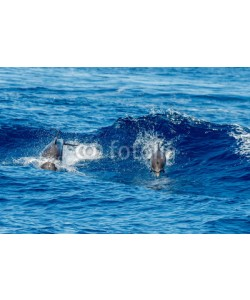 Andrea Izzotti, Dolphins while jumping in the deep blue sea