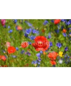 S.H.exclusiv, Grußkarte - Blumenwiese - Wildblumen - Sommerwiese
