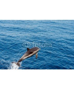 Andrea Izzotti, Dolphin while jumping in the deep blue sea