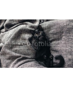 Alena Ozerova, Kitten on blanket