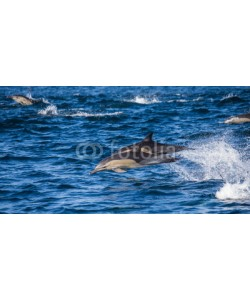 gudkovandrey, Dolphins jump out at high speed out of the water. South Africa. False Bay.