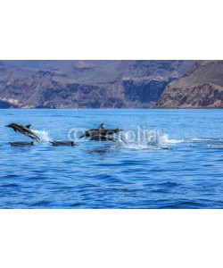 bennymarty, Dolphins jumping near the coast of a Isla Espiritu Santo in Baja California.