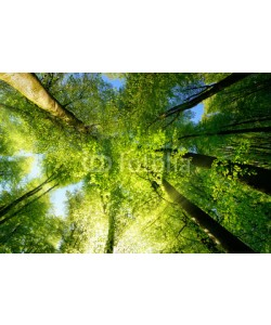 Smileus, Rays of sunlight falling through a tree canopy create an enchanting atmosphere in a fresh green forest