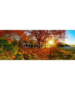 John Smith, Wonderful autumn landscape with bright sun, colorful trees and wide meadows
