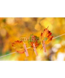 Alaskajade, Colorful autumn leaves with a heart shape cut hanging on a clothesline by a clothespin
