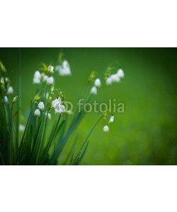 bildschoenes, Frühlingsblumen