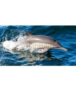 Elizabeth, Common dolphin
