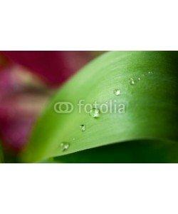 Nailia Schwarz, Dew Drops