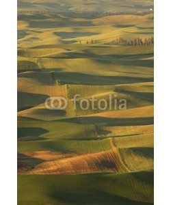 Patricia Thomas, Sunrise over the rolling hills of Palouse