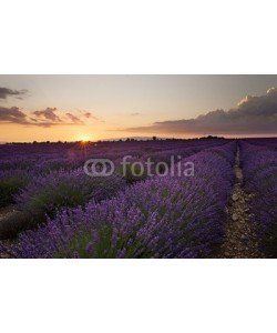 Patricia Thomas, Sunset over Lavender in Provonce