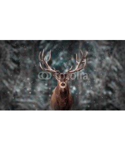 delbars, Noble deer male in winter snow forest. Artistic winter christmas landscape.
