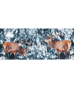 delbars, Two noble deer male against in winter snow forest. Artistic winter landscape. Christmas image. Winter wonderland.