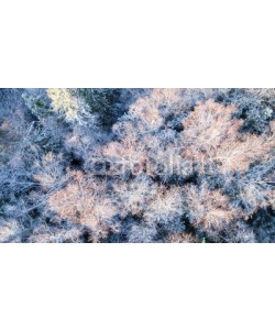 raland, Beautiful view of trees covered by snow. Winter forest.