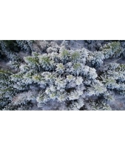 raland, Beautiful view of trees covered by snow. Forest in winter.