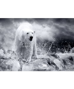Andrii Iurlov, White Polar Bear Hunter on the Ice in water drops.