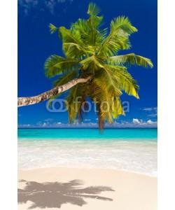 Beboy, seychelles plage cocotier