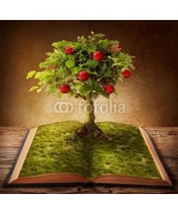 Elena Schweitzer, Book of knowledge