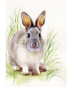 Nadiia Starovoitova, Rabbit