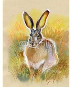 Nadiia Starovoitova, Bunny gray