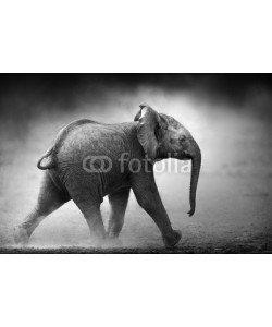 JohanSwanepoel, Baby Elephant running (Artistic processing)