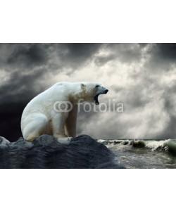 Andrii Iurlov, White Polar Bear Hunter on the Ice in water drops.