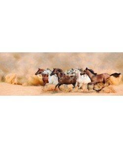 loya_ya, Herd gallops in the sand storm