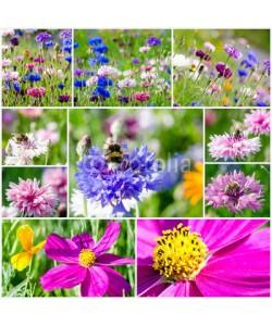 doris oberfrank-list, Collage: Bunte Kornblumen mit Bienen und Cosmeen :)