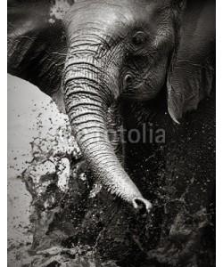 JohanSwanepoel, Elephant splashing water