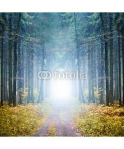 eyetronic, Mystischer Wald im Nebel
