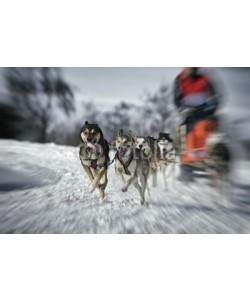Blickfang, Hundeschlittenrennen Zoombewegung