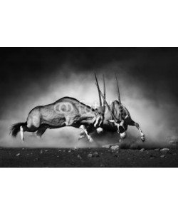 JohanSwanepoel, Gemsbok fight