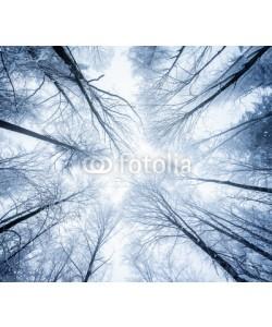 eyetronic, Winterlicher Wald